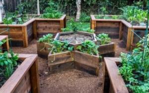 vege-garden