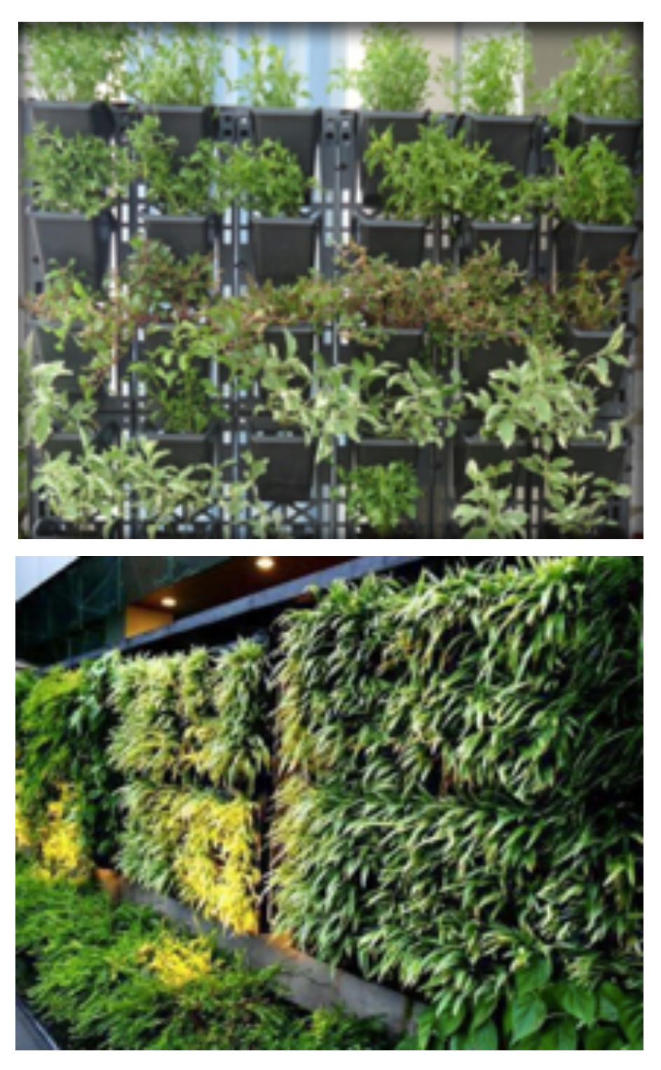 natura-india-green-wall-plastic-potted-system